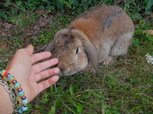 ici lapin magnifique pour aventure inoubliable <3 je vs aime <3