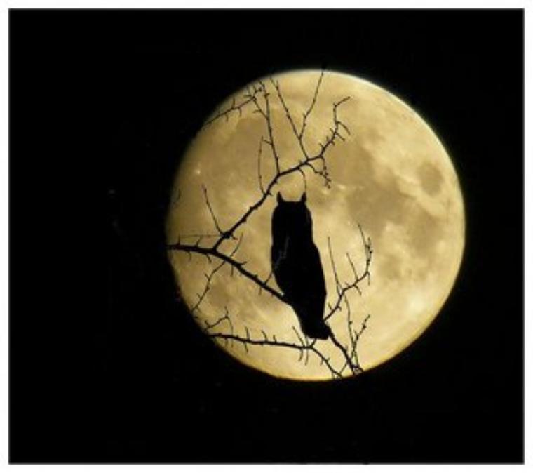 ......................C'est Beau, Une Chouette, La Nuit..........................