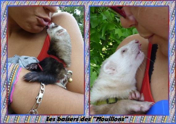 """Les baisers des """"Mouillons"""""""