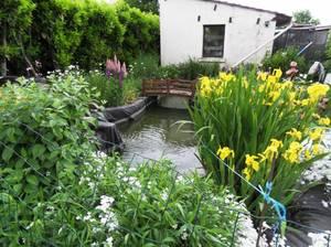 Un bassin fleurie