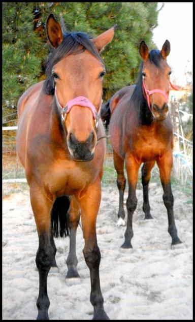 Sofya & Paola