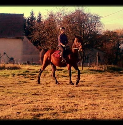 L'équitation plus qu'une passion. <3