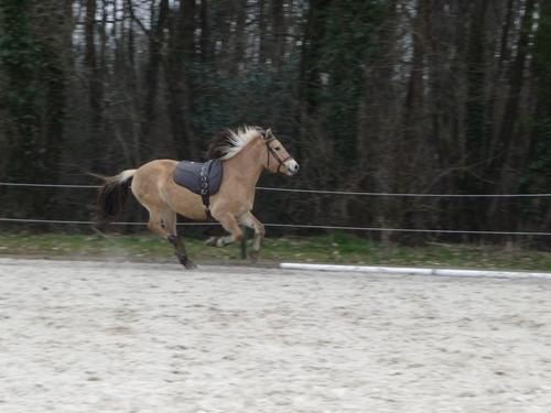 """""""Il n'y a pas de secrets aussi intimes que ceux d'un cavalier et de son cheval."""" ♥"""