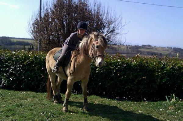 > .. L'air du paradis est celui qui souffle entre les oreilles d'un cheval .. <