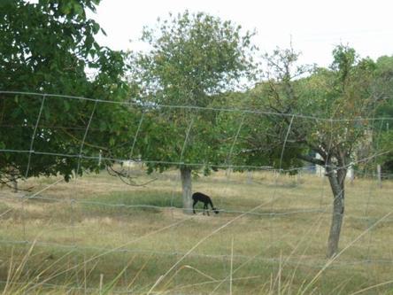 Un lama jouant à cache cache