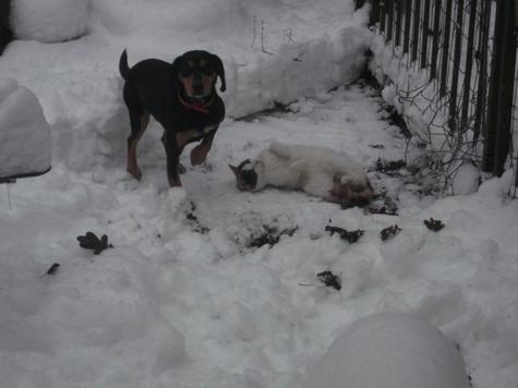 le chat et la neige