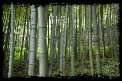 Le bambou et l'entrepreneur.