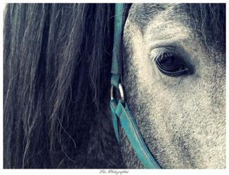 Cesser de t'aimer, c'est comme pleurer sans verser de larmes, ou crier en silence : s'est impossible :$