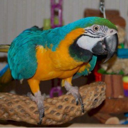 bernard mon perroquet