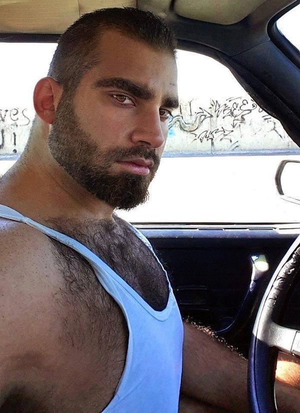 beau bear viril