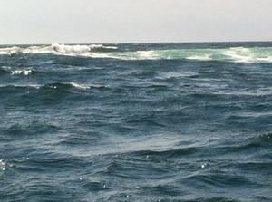 Sortie l île d'yeu