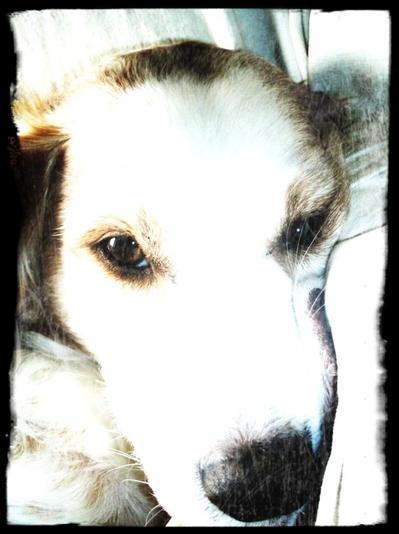 Un chien est un être qui vous décevra jamais