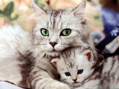 les chat: