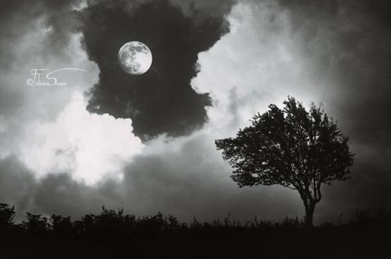 """"""" Si tu es le préféré de la lune, que t'importent les étoiles ? """""""