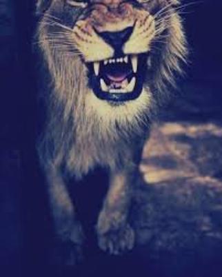 Roar~katy perry <3