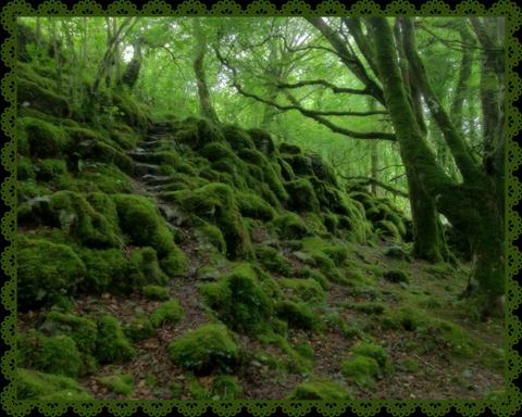 A la découverte des fées et autres créatures irlandaises