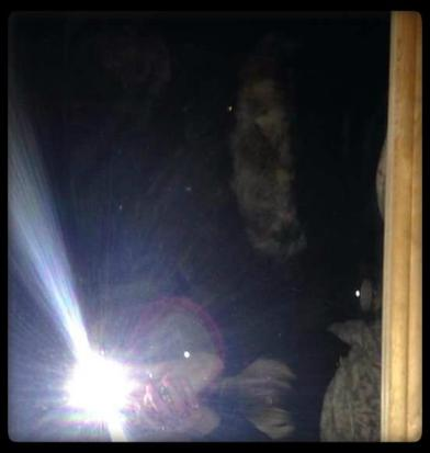 La cage de St Osyth, la terrible expérience de Vanessa Mitchell