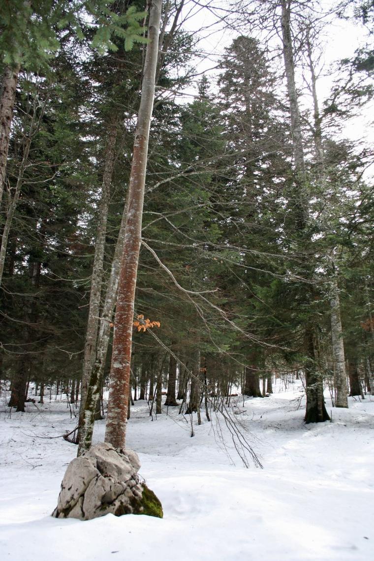 La Forêt de Lente
