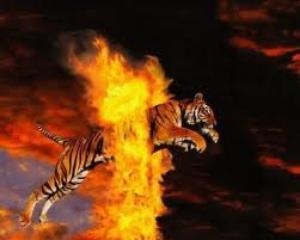 Saut à travers les flammes