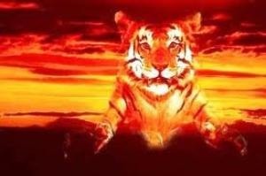 Tigre effet