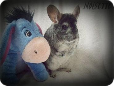 Le premier couple ♥ Noisette et Praline ♥