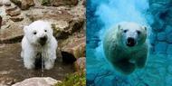 ღSauver les ours polaires on Louval30.sky' ©