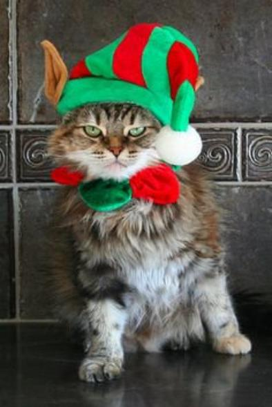 Christmas Cats Part 4