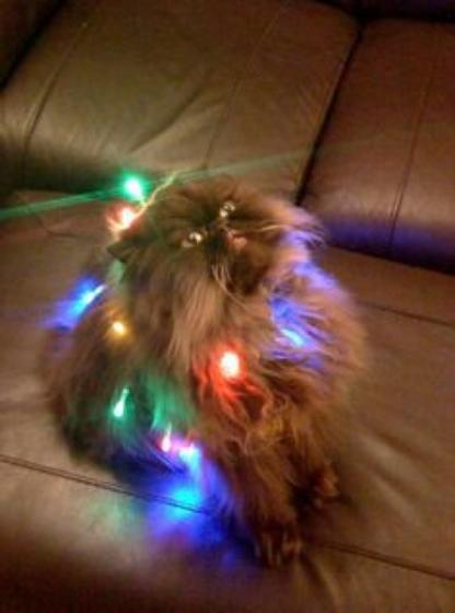 Christmas cats Part 5