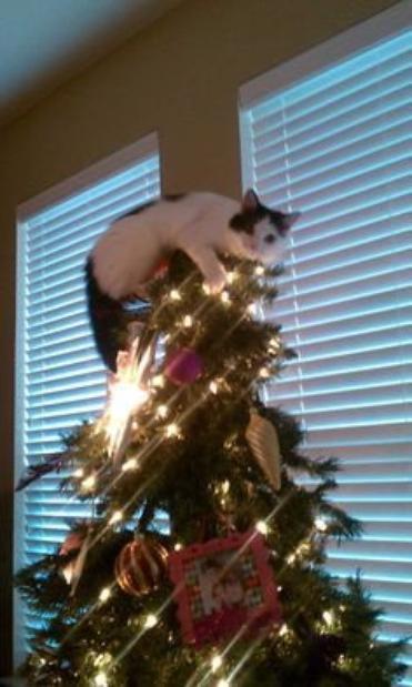 """""""I love Christmas"""""""