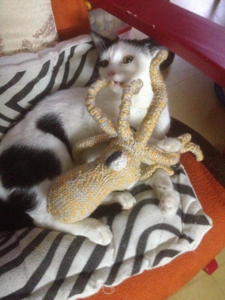 L'attaque du calamar : Chat va faire mal !!!!!!