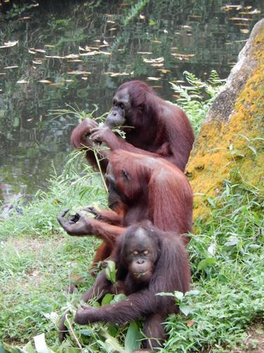 #18 - Singapore Zoo