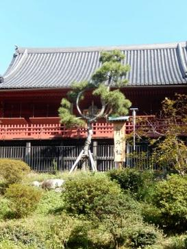#57 - Japan Day 7
