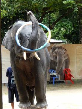 #79 - Koh Samui, Thailand - Day 2