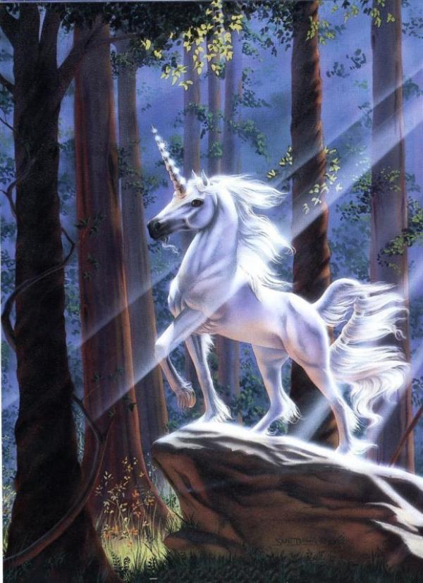 La Poudre de Licorne Aurait Des Vertues Magiques !