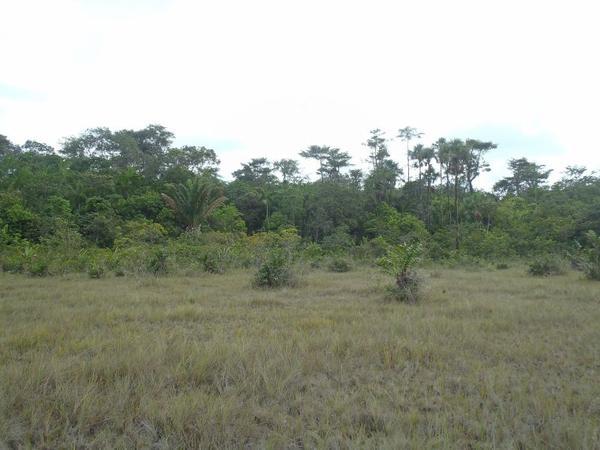 Une balade dans la savane qui se transforme en sortie Cayenne-Land, 11-05-14