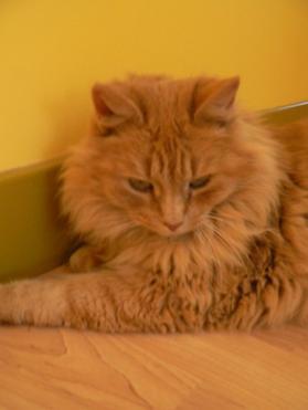 mon petit chat $) ♥