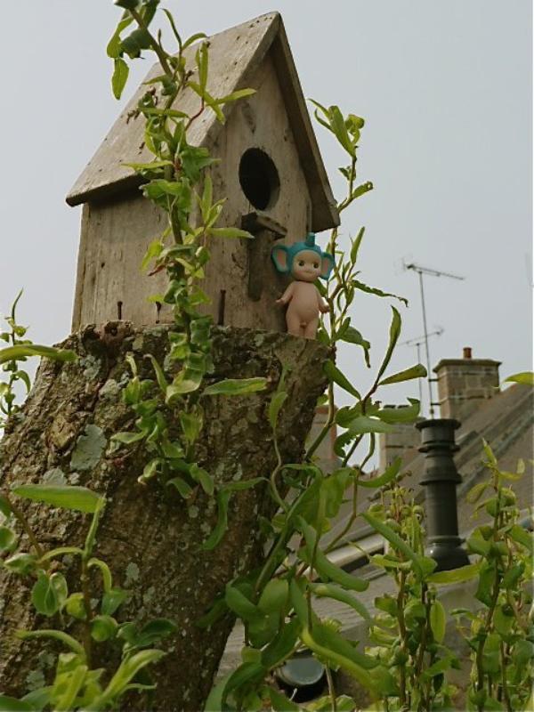 le village des oiseaux.