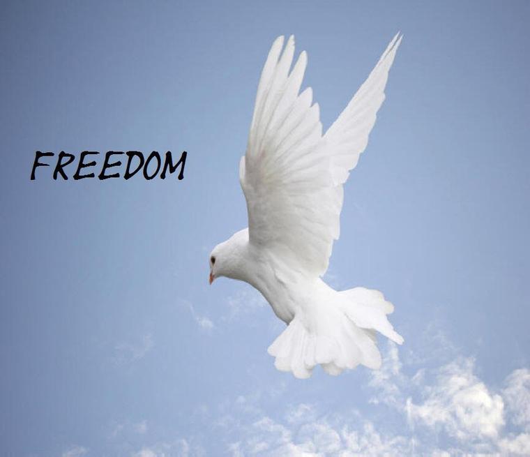 Freedom & Peace .