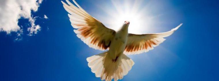 Devenez membre de la communauté Save Peace sur Facebook ..