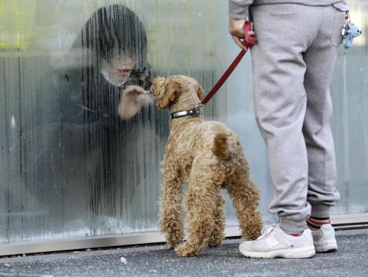 Fukushima : Un chien rend visite à sa maitresse irradiée.
