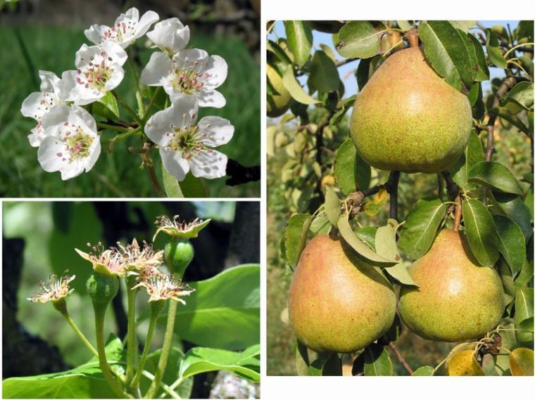 Le mensonge est un arbre qui donne des fleurs mais pas de fruits
