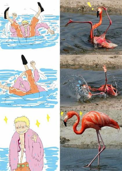 Funny picture One piece