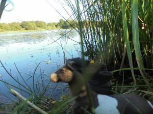 Ah je l'aime cet étang !