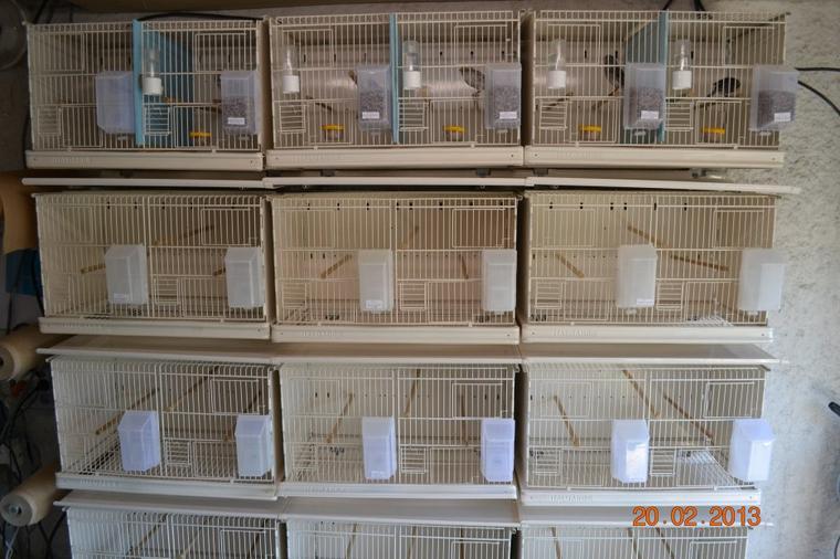 Préparation élevage 2013