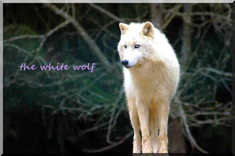 one shot de Wolves of konoha