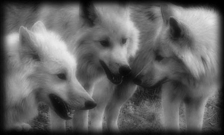 Wolves of konoha: chapitre 1