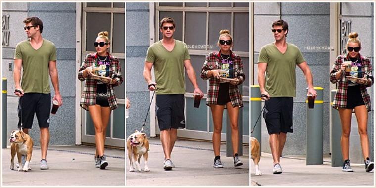July 29th ; Miley et Liam promenaient Ziggy dans les rues de Philadelphie.