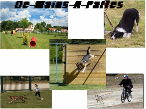 Les Sports Canins :