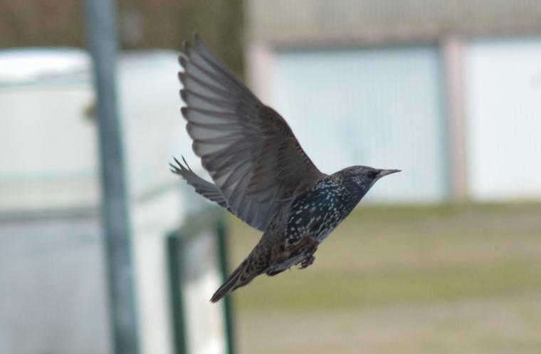 vole d'oiseau