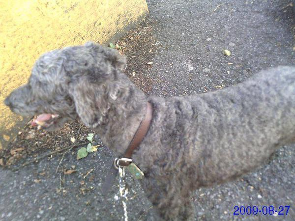ma chienne , la petite Dina (06.08.98- 22.09.2014)